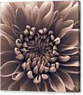 Brown Flower Canvas Print