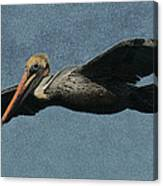 Brown Pelican Painterly Canvas Print