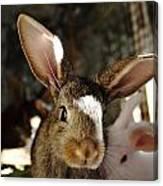 Brown Rabbit Canvas Print