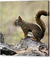 Brown Squirrel In Spokane Canvas Print