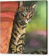 Brown Tabby Canvas Print