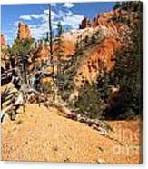 Bryce Canyon Forest Canvas Print