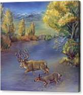 Buck And Doe Crossing River Canvas Print