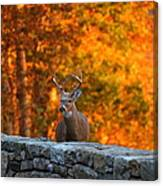 Buck In The Fall 01 Canvas Print