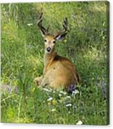 Buck What Are You Looking At Canvas Print