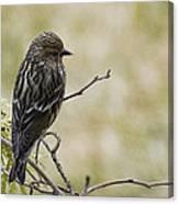 Budding Spring Song Canvas Print