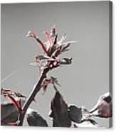 Budless Canvas Print