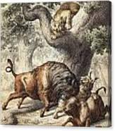 Buffalo & Lynx Canvas Print