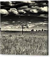 Buffalo Park Horizon Canvas Print