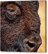Buffalo Up Close Canvas Print