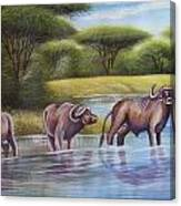 Buffalooes Watering Canvas Print