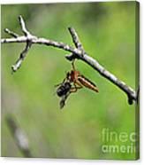 Bug Eat Bug Canvas Print