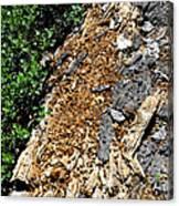 Bug Filled Bear Clawed Log Canvas Print
