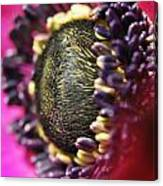 Bulb Flower Canvas Print
