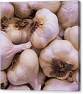 Bulk Garlic Watercolor Canvas Print