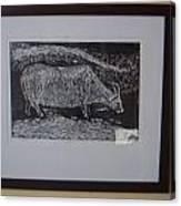 Bull  Canvas Print