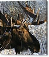 Bull In The Brush Canvas Print