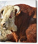 Bull It Is What It Is Canvas Print