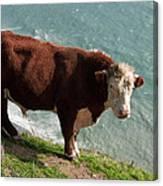 Bull On The Edge Canvas Print