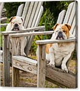 Bulldogs Relaxing At The Beach Canvas Print