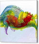 Bullfish Canvas Print
