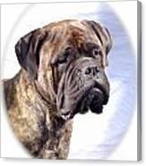 Bullmastiff 35 Canvas Print