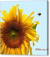 Bumble Bees Love Sunflowers Canvas Print