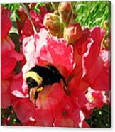 Bumblebee And Snapdragon Canvas Print