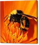 Bumblebee On Flower Canvas Print