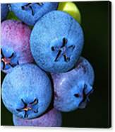 Bunch Of Blueberries Canvas Print