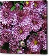 Bunch Of Chrysanths Canvas Print