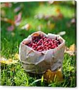 Bunch Of Cranberries Canvas Print