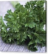 Bunch Of Parsley Canvas Print