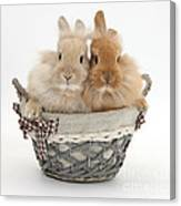 Bunnies A Basket Canvas Print