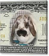 Bunny Money Canvas Print