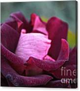 Burgundy Velet Canvas Print