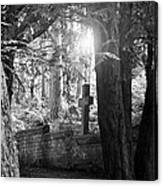 Buried In The Woods Canvas Print