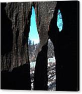 Burned Trees 10 Canvas Print