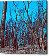 Burned Trees And The Sky Canvas Print