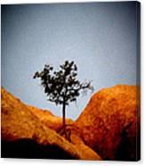 Burning Bush 2 Canvas Print