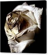 Burnt Tea Rose Canvas Print