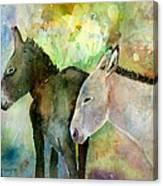 Burros Canvas Print