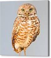 Burrowing Owl V Canvas Print