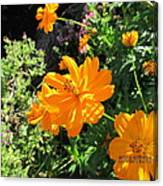 Burst Of Orange Canvas Print