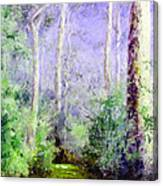 Bush Trail At The Afternoon Canvas Print