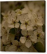 Bushel Of Flowers Canvas Print