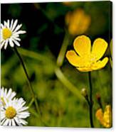 Buttercup In Riverside Park Canvas Print