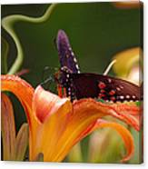 Butterflies Are Free... Canvas Print