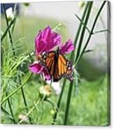 Butterflies Fly Canvas Print