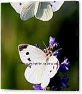 Butterfly - Cabbage White - As One Canvas Print